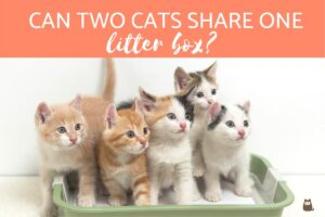 why do you need a electric litter box for multiple cats