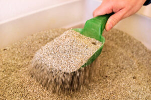 The type of kitty litter you use