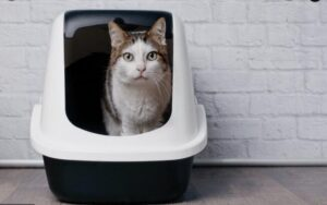 extra large litter box for large cats