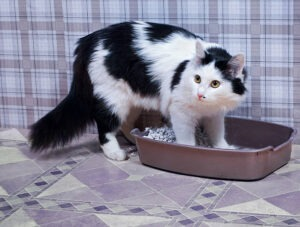 Things to consider in picking the best litter box for senior cats