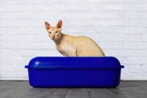best ;itter box for large cats
