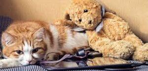 best litter box for arthritic cats