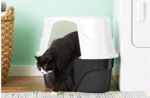large litter box with a lid