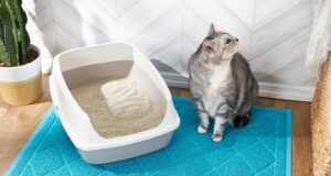 Why does my old cat not use the litter box anymore