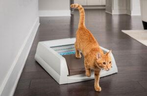 best automatic kitty litter box