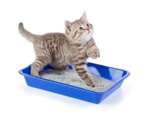 Benefits of Using Homemade Clumping Cat Litter