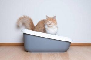 best litter box for long hair cats