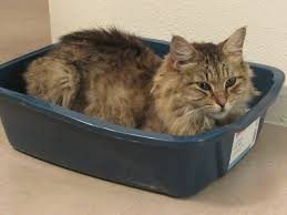 low entry litter box for senior cats