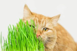 Stop Your Cat From Eating Cat Litter