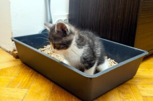 what to do with used clumping cat litter