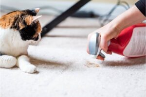 how to get cat spray smell out of house