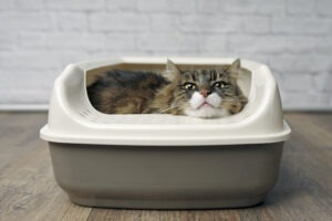 medical Reasons Why Cat Refuses to Pee in the Litter Box
