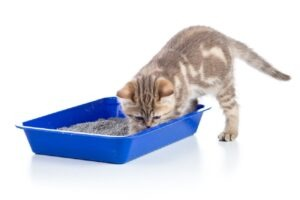 how long can a cat go without a litter box