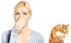 how to get rid of cat spray smell