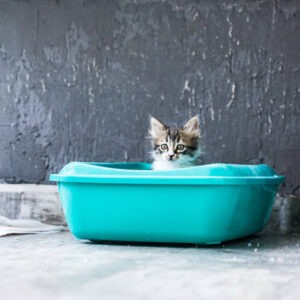 Why Do You Need Cat Litter Boxes for Small Spaces