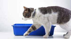 best litter box for picky cats