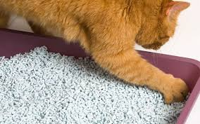 why wont cat poop in litter box