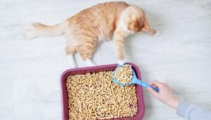how to use non clumping cat litter