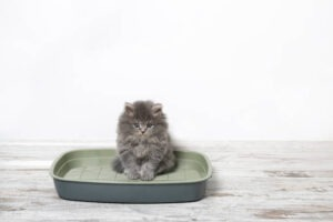 recycled cat litter