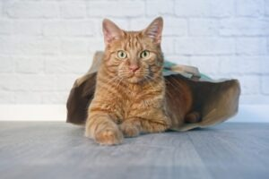 Why Do Your Kitty's Litter Box Patterns Matter