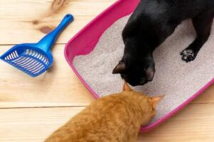 Why Do Some Cats Play In the Litter Box