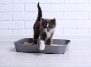 signs your cat may have a problem beyond the litter box