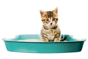 why do cats eat cat litter