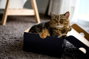 The Litter Box Is As Complicated At Your Cat