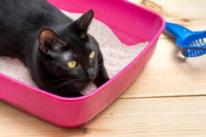 How To Deal With Cats Sleeping In the Litter Box