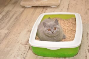 how much does cat litter cost