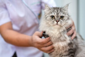 how can i treat my cats uti at home
