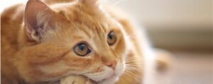 how can i treat my cats uti naturally