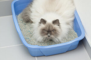 Can Hiding in the Litter Box Indicate a Medical Issue