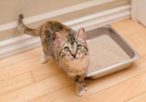 effectively scoop cat litter