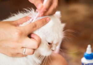 natural remedy for cat bite
