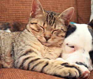 natural remedies for feline uti