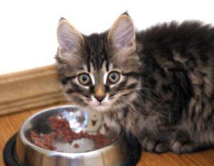 cat stop eating wet food